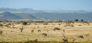 Lewa Conservancy