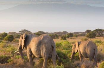 Tanzania Self Drive 14 days Bush to Beach Mid range