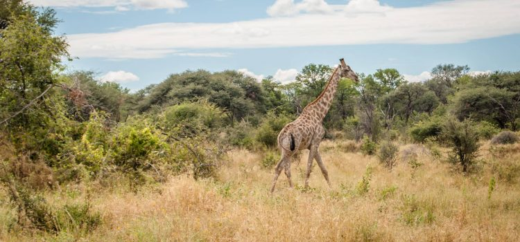 An unforgettable Botswana safari: Part 3 – Hyena Pan