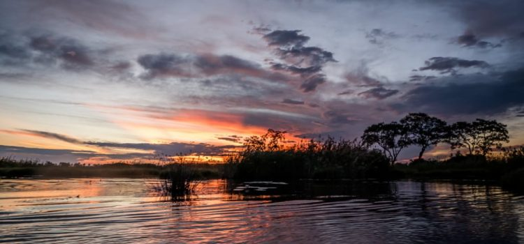 An unforgettable Botswana safari: Part 1 – The Okavango Delta