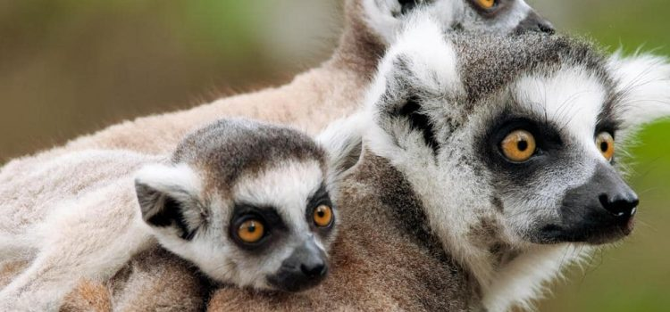 Madagascar: Southern Tour – Classic