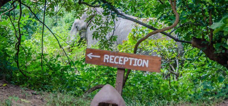 Trip report: Visiting Flatdogs Camp, South Luangwa National Park, Zambia