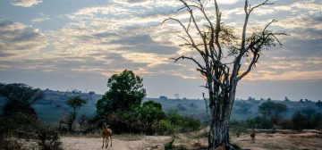 Trip report: Kampala and Murchison Falls National Park, Uganda