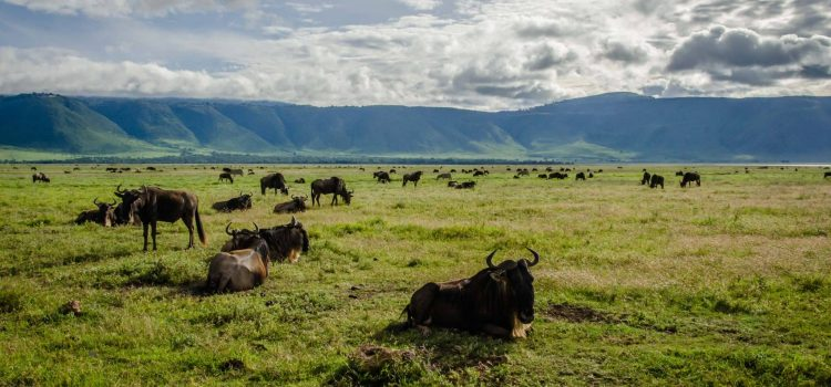 Video: Driving through the Ngorongoro Crater in Tanzania