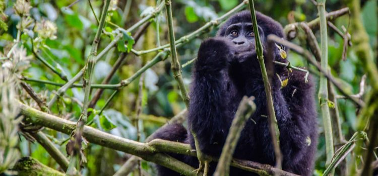 Trip report: Queen Elizabeth National Park, the deep south and gorilla tracking, Uganda