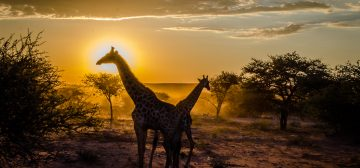 Trip report: Namibia – Driving north to Etosha National Park