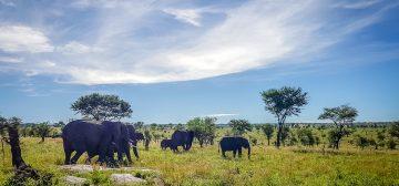Safari Notes: Serengeti National Park, Tanzania