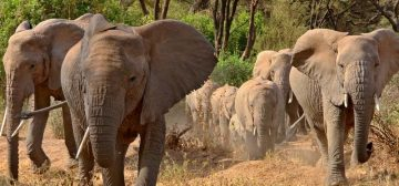 Northern Tanzania Highlights – Classic
