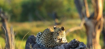 Highlights of Botswana and Zambia – Exclusive